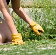 pulling weeds how to get rid of weeds naturally